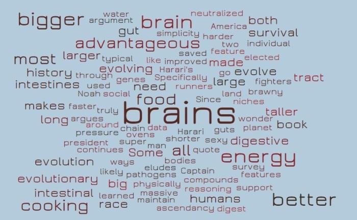 Is Human Evolution an Inevitable Race Toward Bigger Brains?